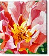 Moss Rose Acrylic Print