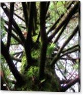 Moss Tree Acrylic Print