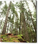 Moss Under The Cedars Acrylic Print