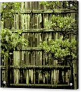 Mossy Bamboo Fence - Digital Art Acrylic Print