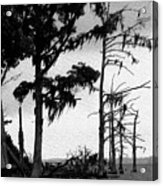 Mossy Beach Trees Acrylic Print