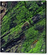 Mossy Acrylic Print