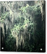 Mossy Dream Acrylic Print