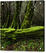 Mossy Fence 3 Acrylic Print by Bob Christopher