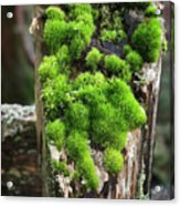 Mossy Fence - 365-321 Acrylic Print