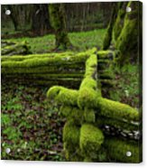 Mossy Fence 4 Acrylic Print