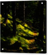 Mossy Forest Path Acrylic Print