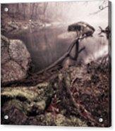 Mossy Log Acrylic Print