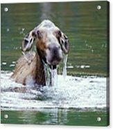Mossy Moose Acrylic Print