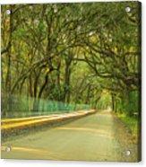 Mossy Oaks Canopy In South Carolina Acrylic Print