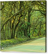 Mossy Oaks Canopy Panorama Acrylic Print