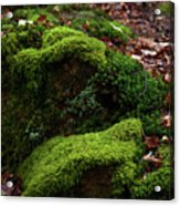 Mossy Rocks In Spring Woods Acrylic Print