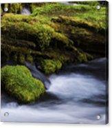 Mossy Rocks Oregon 3 Acrylic Print