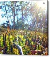 Mossy Sunburst Acrylic Print