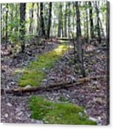 Mossy Trail Acrylic Print