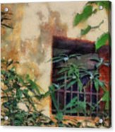 Mossy Wall Acrylic Print