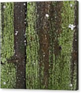 Mossy Winter Fence Acrylic Print