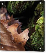 Mossy Wood 005 Acrylic Print