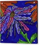 Most Unusual Poinsettia In A Midnight Blue Sky Acrylic Print
