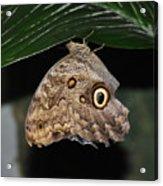 Moth 2 Acrylic Print