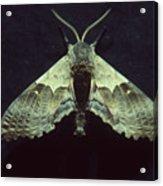 Moth At Texaco Station Acrylic Print