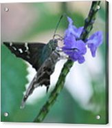 Moth On Blue Flower Acrylic Print
