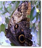 Moth On Blue Flowers Acrylic Print