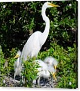 Mother And Children Acrylic Print