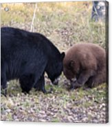 Mother And Cub Acrylic Print