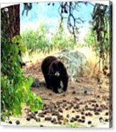 Mother Bear Acrylic Print