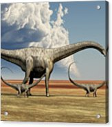 Mother Diplodocus Dinosaur Walks Acrylic Print