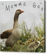 Mother Goose Acrylic Print by Juli Scalzi
