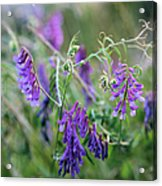 Mother Nature's Art Acrylic Print