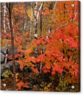 Mother Nature's Palette Acrylic Print