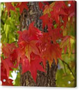 Mother Nature's Style Acrylic Print