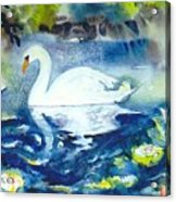 Mother Swan And Baby Acrylic Print
