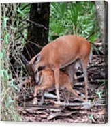 Mother's Care Acrylic Print