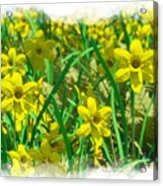 Mound Of Flowers... Acrylic Print