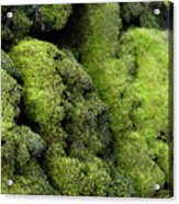 Mounds Of Moss Acrylic Print