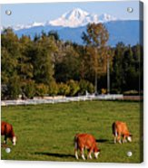 Mount Baker From Langley Bc Acrylic Print by Marion McCristall