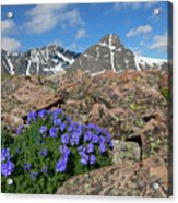 Mount Holy Cross With Wildflowers 2 Acrylic Print