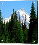 Mount Hood Majestic Acrylic Print