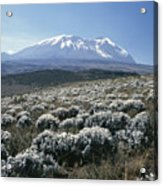Mount Kilimanjaro, The Breach Wall Acrylic Print