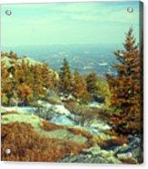 Mount Monadnock Spruce Injury Acrylic Print
