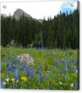 Mount Sneffels Lupine Landscape Acrylic Print