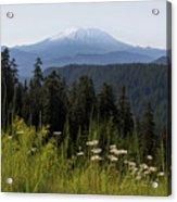 Mount St Helens In Washington State Acrylic Print