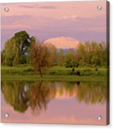 Mount St Helens Reflection During Sunset Acrylic Print
