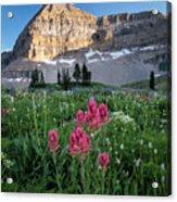 Mount Timpanogos Wildflowers Acrylic Print
