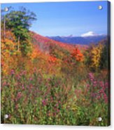 Mount Washingon Flowers Foliage Acrylic Print