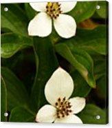 Mountain Berries Acrylic Print